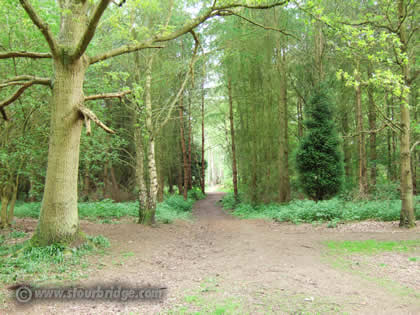 footpath in Bunkers Hill Wood
